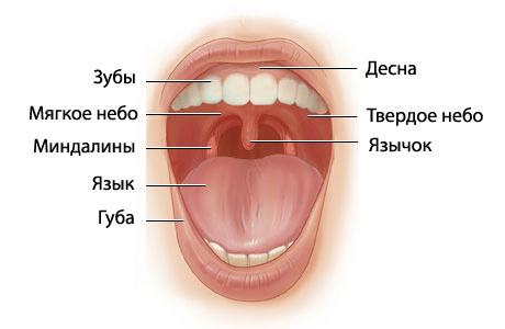 воспаление миндалины в горле фото