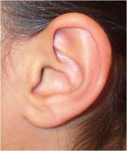 ушная раковина фото