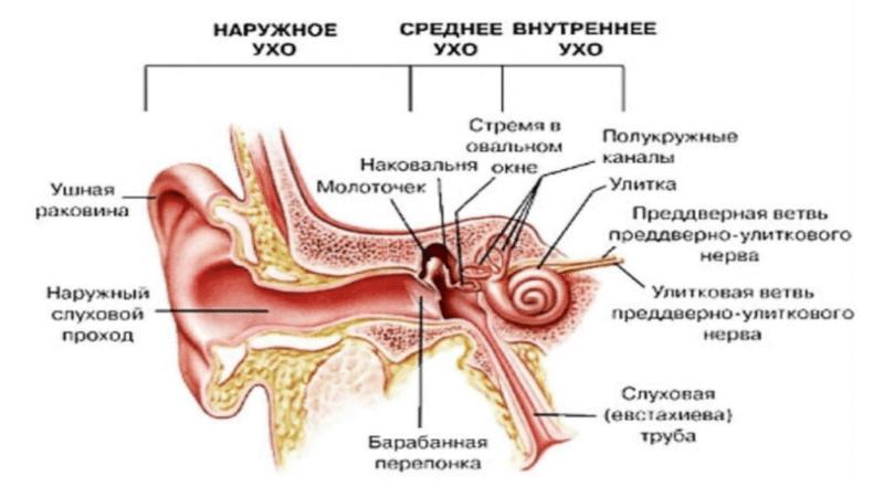активные точки на ухе
