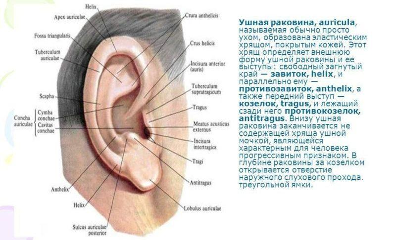 болит хрящ уха