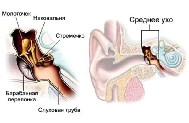 Гул в ушах и голове причины