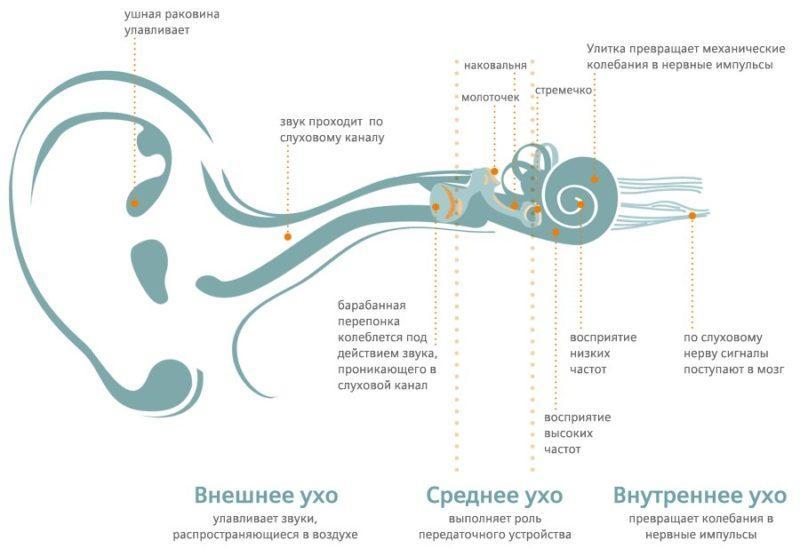 нарушение слуха причины и классификация