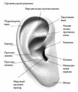 болит ушная раковина при надавливании