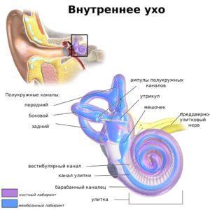 воспаление внутреннего уха у взрослых симптомы