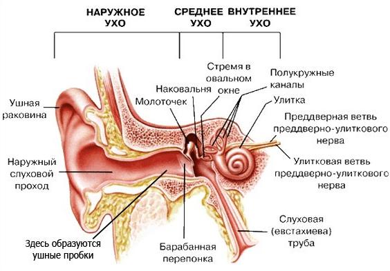чем лечить отит уха у взрослых
