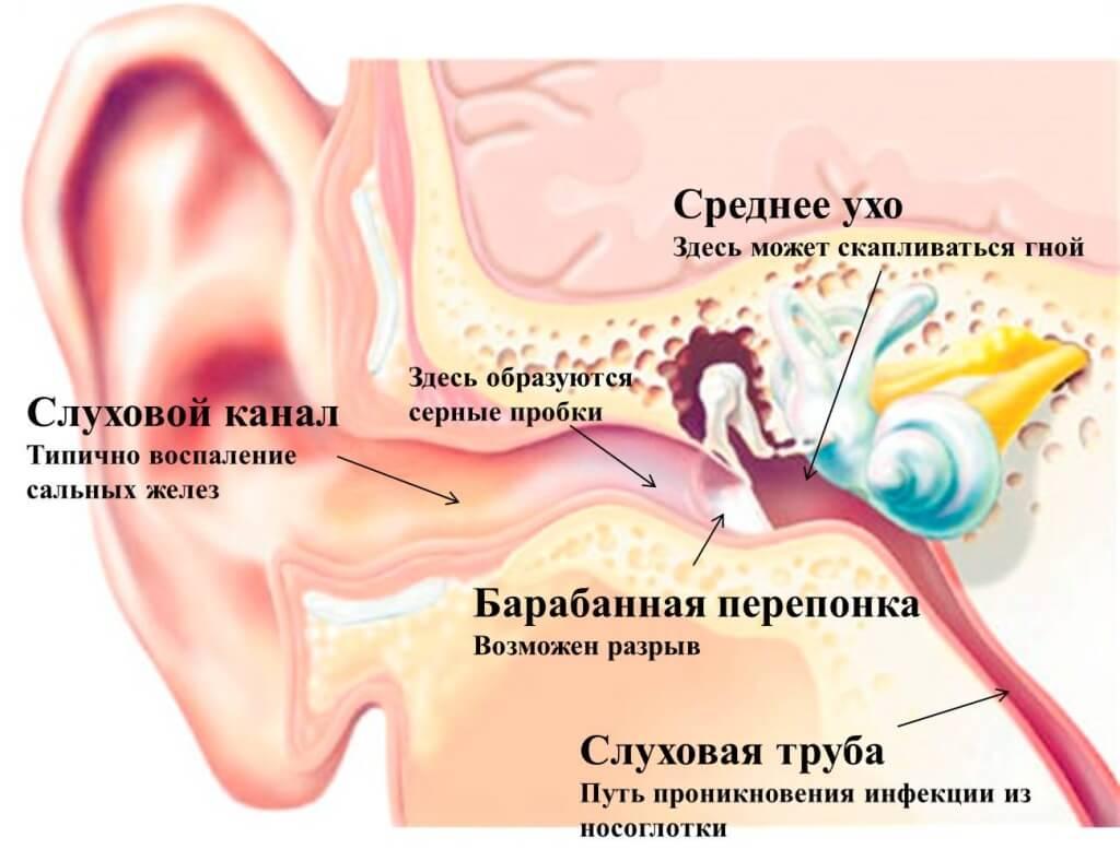 ушная перепонка фото