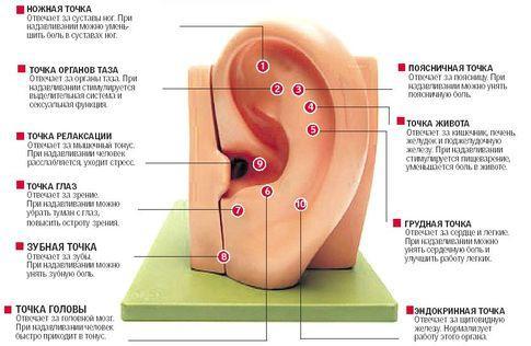 массаж ушей при заложенности уха