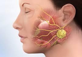 ушная железа