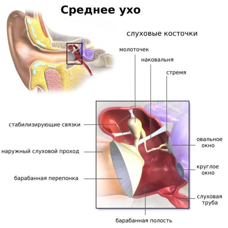 что такое среднее ухо