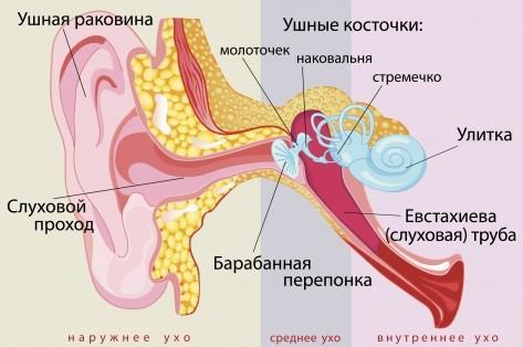 что бывает в ушах-4