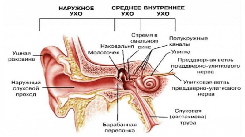 Ушной канал