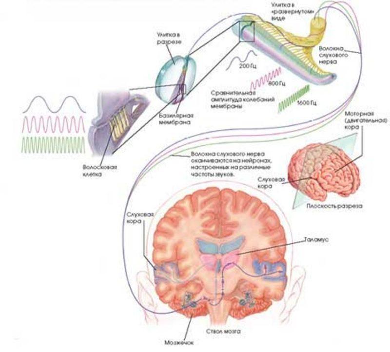 как восстановить слух после наушников