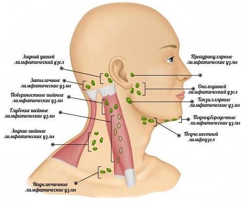 При прорезывании зубов от боли в