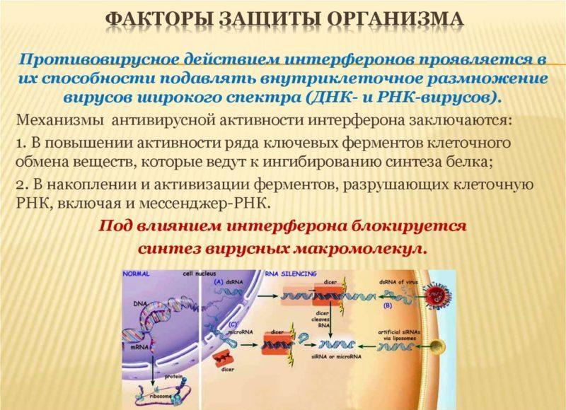 спрей гриппферон при беременности