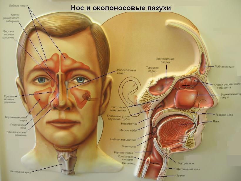 глазные капли в нос