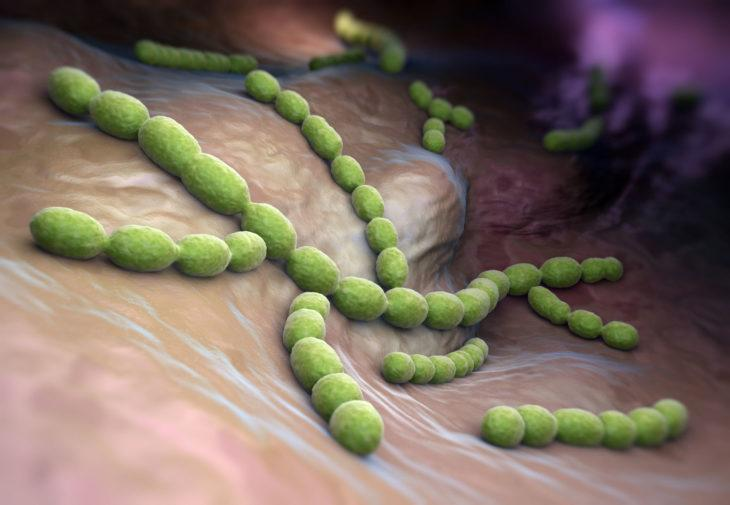 streptococcus pneumoniae в носу у ребенка