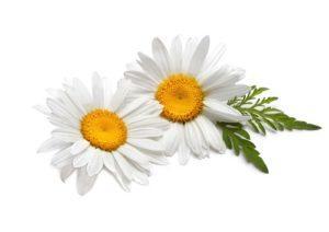 -лечение ринита в домашних условиях