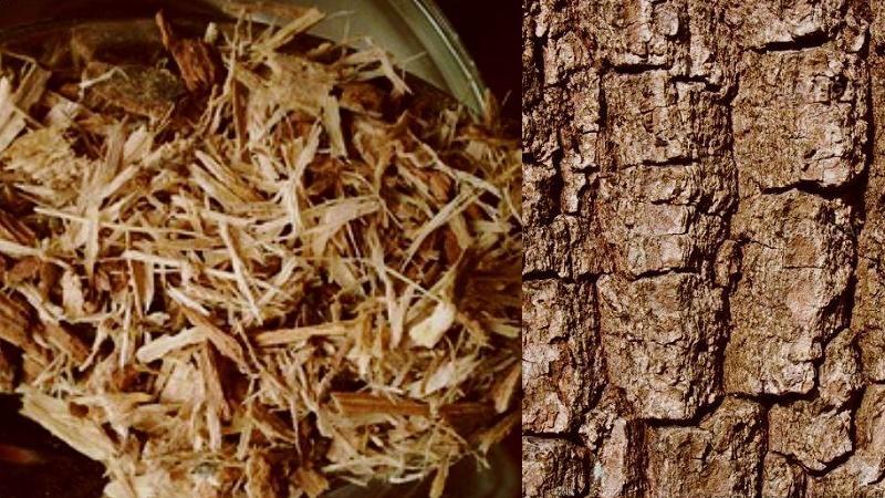 кора дуба в нос при аденоидах