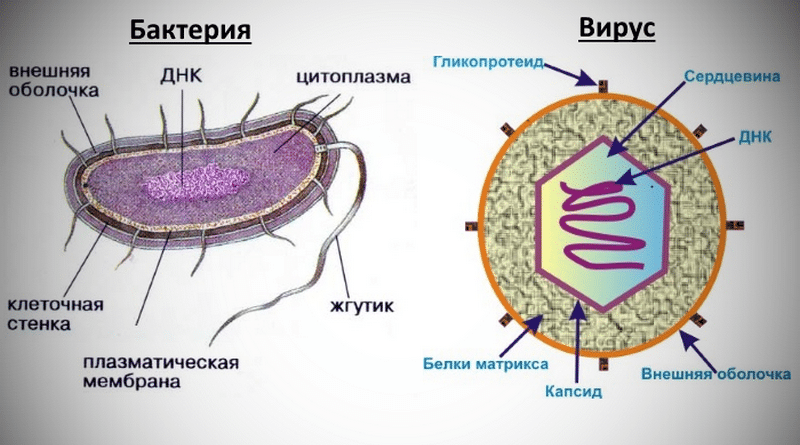 как отличить вирусный насморк от бактериального