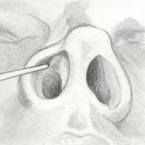 нижние носовые раковины