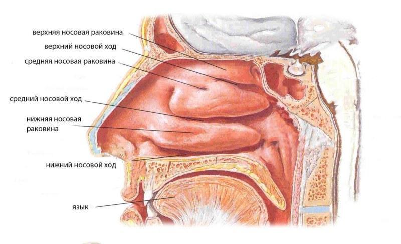 что такое ультразвуковая дезинтеграция нижних носовых раковин