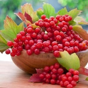 ягоды калины от кашля