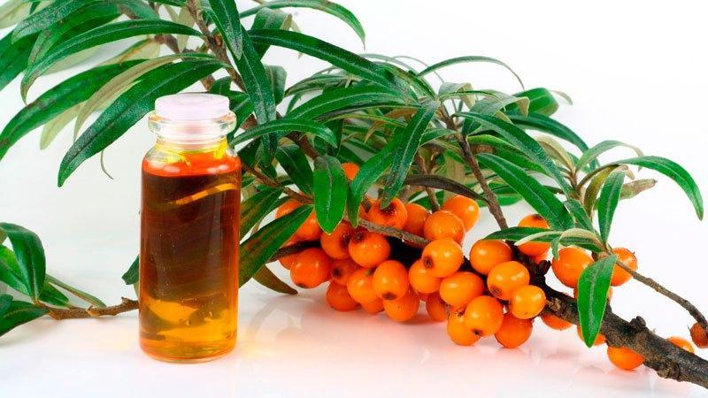 Как лечить кашель облепиховым маслом